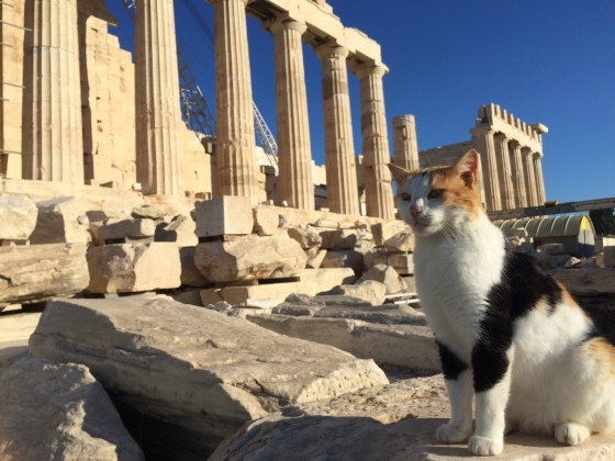 cat parthenon