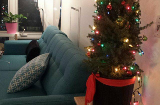couch-and-tree